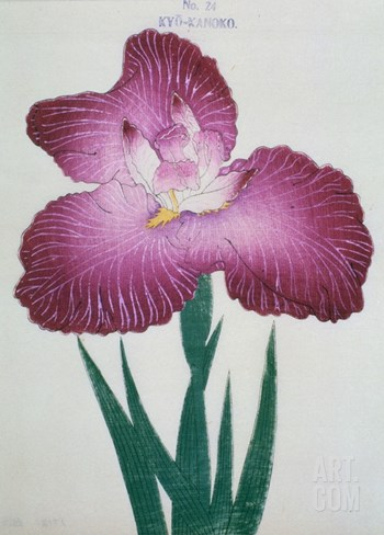 Kyo-Kanoko Book of a Dark Pink Iris Stretched Canvas Print
