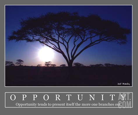 Opportunity - Acacia Tree, Africa Stretched Canvas Print