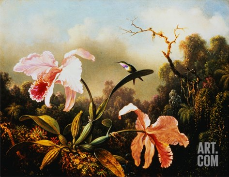 Orchids and Hummingbirds Stretched Canvas Print