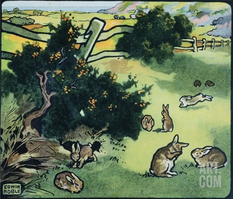 Illustration of Rabbits in a Field by Edwin Noble Stretched Canvas Print