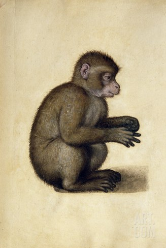 A Monkey Stretched Canvas Print