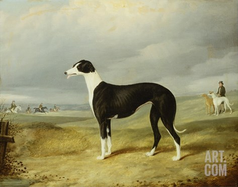 A Black and White Greyhound in an Open Landscape, with Hunters and Huntsmen Beyond Stretched Canvas Print