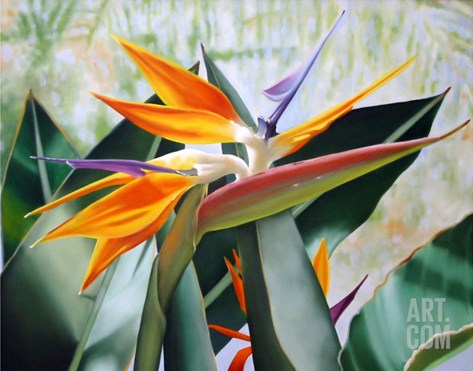Bird of Paradise Stretched Canvas Print