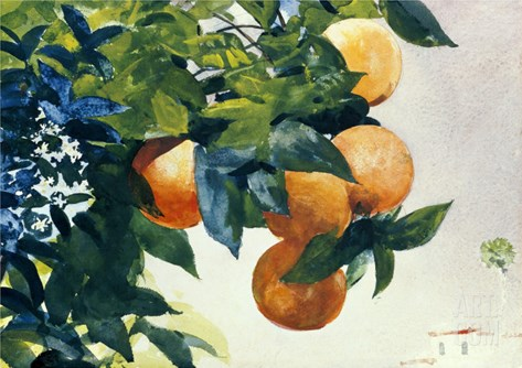 Oranges on a Branch, 1885 Stretched Canvas Print