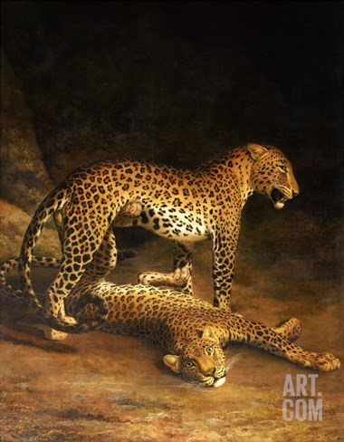 Two Leopards Lying in the Exeter Exchange, 1808 Stretched Canvas Print