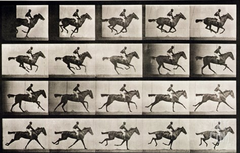 "Jockey on a Galloping Horse, Plate 627 from ""Animal Locomotion,"" 1887 Stretched Canvas Print"