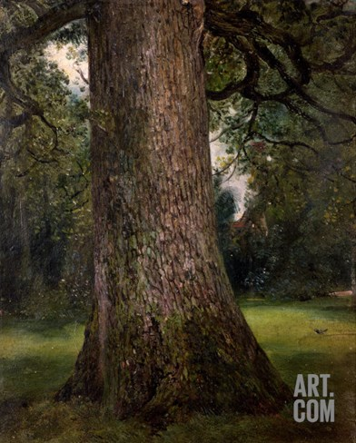 Study of the Trunk of an Elm Tree, circa 1821 Stretched Canvas Print