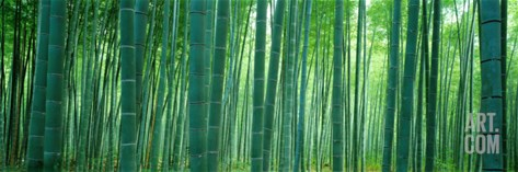 Bamboo Forest, Sagano, Kyoto, Japan Stretched Canvas Print