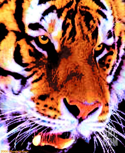 Wild Cat Tiger Stretched Canvas Print