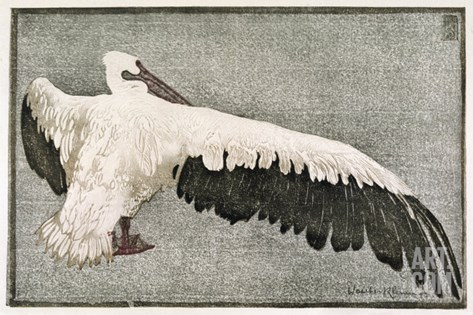 Pelican with Outspread Wings Stretched Canvas Print