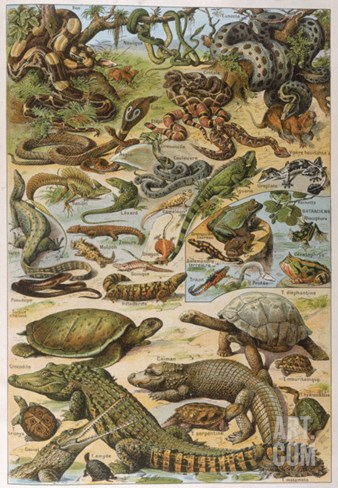 An Amazing Illustration Covering the Whole Range of Reptilian Species from Snakes to Newts Stretched Canvas Print