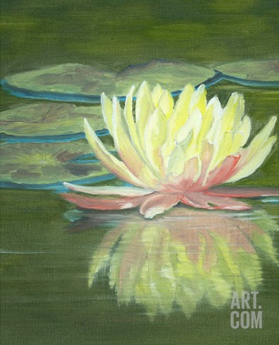 The Water Lily Stretched Canvas Print