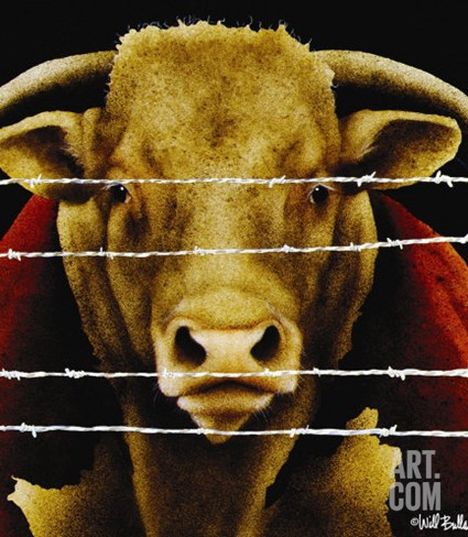Bunch of Bull Stretched Canvas Print