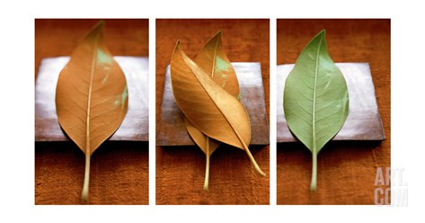Leaves Arrangement Triptych Stretched Canvas Print