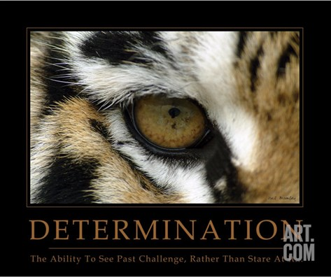 Determination - Eye of the Tiger Stretched Canvas Print