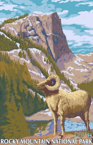 Big Horn Sheep, Rocky Mountain National Park Stretched Canvas Print