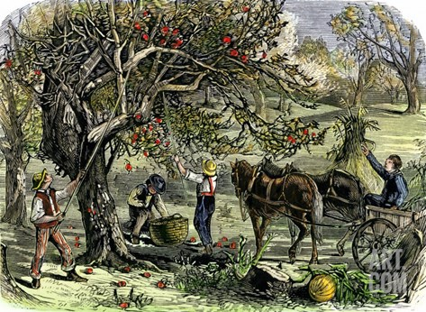 Picking Apples, a Farm Scene Near Pride's Bridge, Maine, c.1800 Stretched Canvas Print
