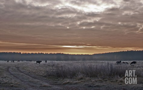 Frosty Sunrise Stretched Canvas Print