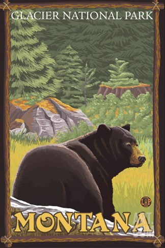 Black Bear in Forest, Glacier National Park, Montana Stretched Canvas Print