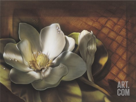 Magnolia, no. 2 Stretched Canvas Print