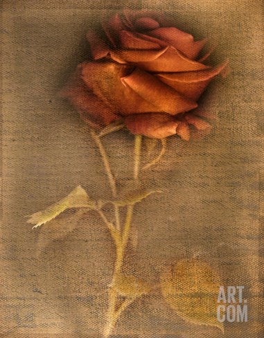 Rose on Fabric Stretched Canvas Print