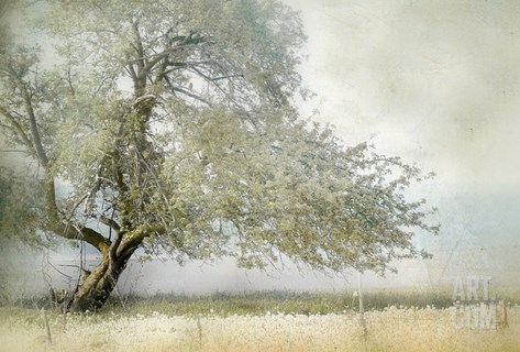 Tree in Field of Flowers Stretched Canvas Print