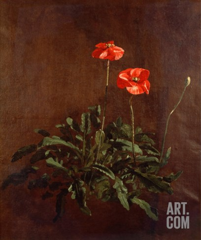 Study of Poppies Stretched Canvas Print