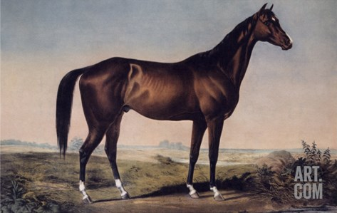 Lexington, The Celebrated Horse Stretched Canvas Print