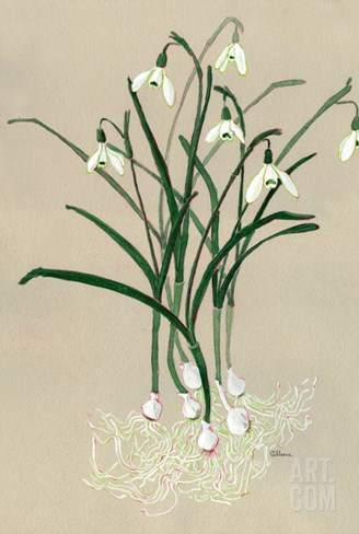 Snowdrops Stretched Canvas Print