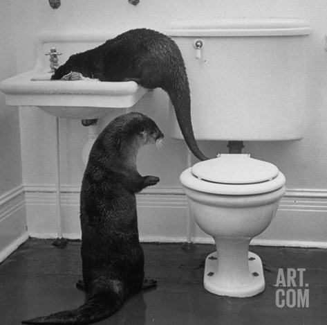 Otters Playing in Bathroom Stretched Canvas Print