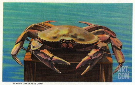 Dungeness Crab on Hood Canal - Hood Canal, WA Stretched Canvas Print