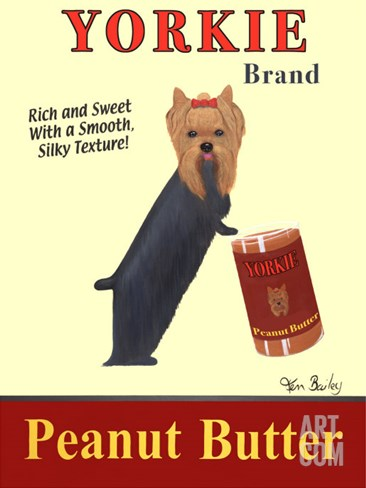 Yorkie Peanut Butter Stretched Canvas Print