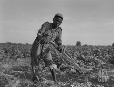 Thirteen-Year Old African American Sharecropper Boy Plowing in July 1937 Stretched Canvas Print