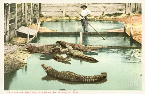 Alligator Joe, Palm Beach, Florida Stretched Canvas Print