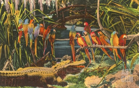 Macaws and Alligator, Florida Stretched Canvas Print