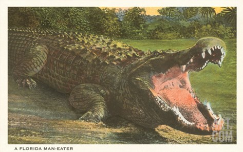 Florida Man-Eater, Alligator Stretched Canvas Print