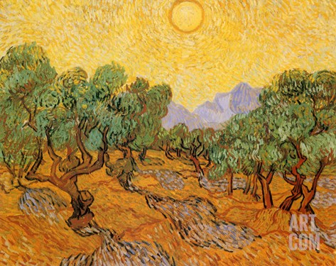 Sun over Olive Grove, 1889 Stretched Canvas Print