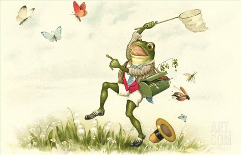 Frog Lepidopterist Stretched Canvas Print
