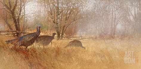 Wild Turkeys Stretched Canvas Print