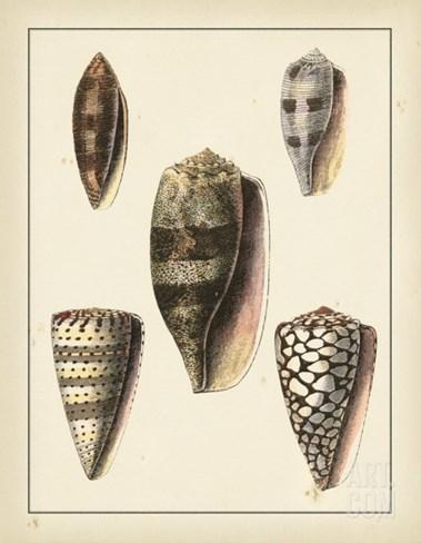 Antique Shells IV Stretched Canvas Print