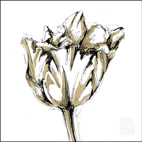 Tulip Sketch I Stretched Canvas Print