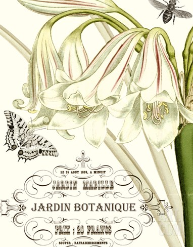 Jardin Botanique I Stretched Canvas Print