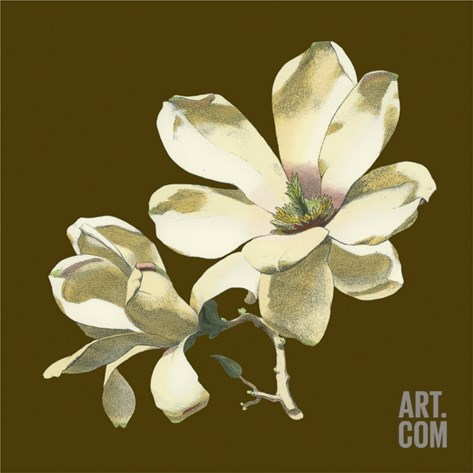 Magnolia on Taupe I Stretched Canvas Print