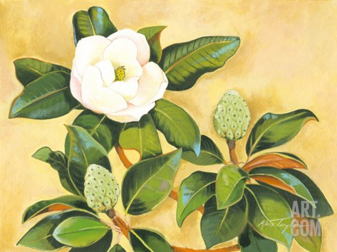 Southern Magnolia II Stretched Canvas Print