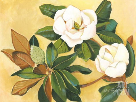 Southern Magnolia I Stretched Canvas Print