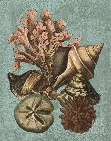Shell and Coral on Aqua I Stretched Canvas Print