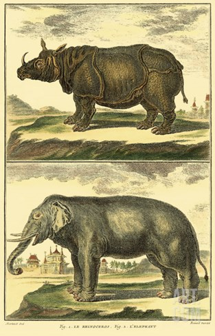 Diderot's Elephant and Rhino Stretched Canvas Print