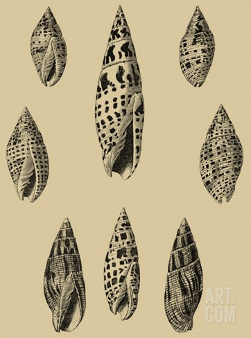 Shells on Khaki IV Stretched Canvas Print
