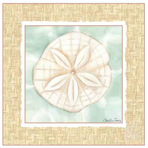 Ocean Sanddollar Stretched Canvas Print