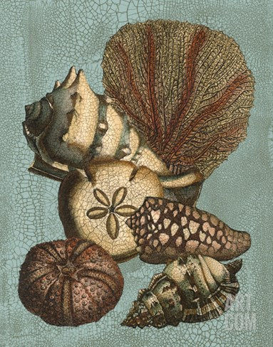Shell and Coral on Aqua II Stretched Canvas Print